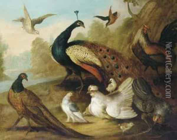 A Peacock, Pheasant, Hen, A Dove And Other Fowl In A Riverlandscape Oil Painting - Marmaduke Cradock