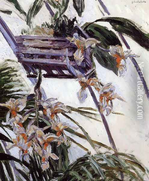 Orchids Oil Painting - Gustave Caillebotte