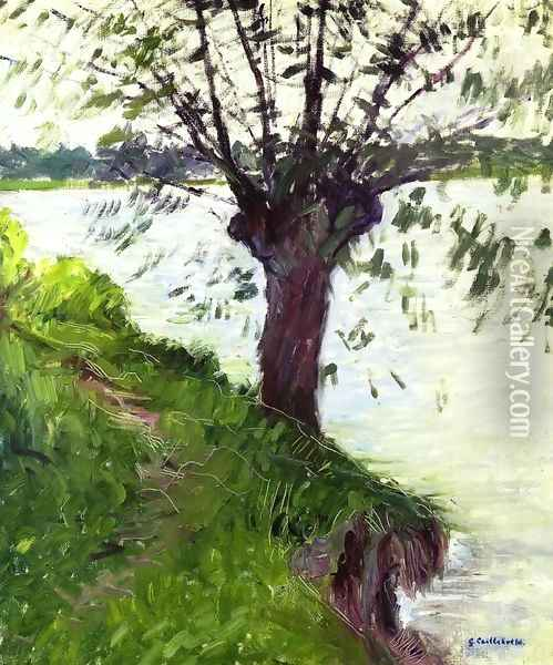 Willow On The Banks Of The Seine Oil Painting - Gustave Caillebotte