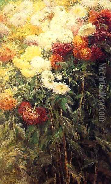 Chrysanthemums, Garden at Petit Gennevilliers Oil Painting - Gustave Caillebotte