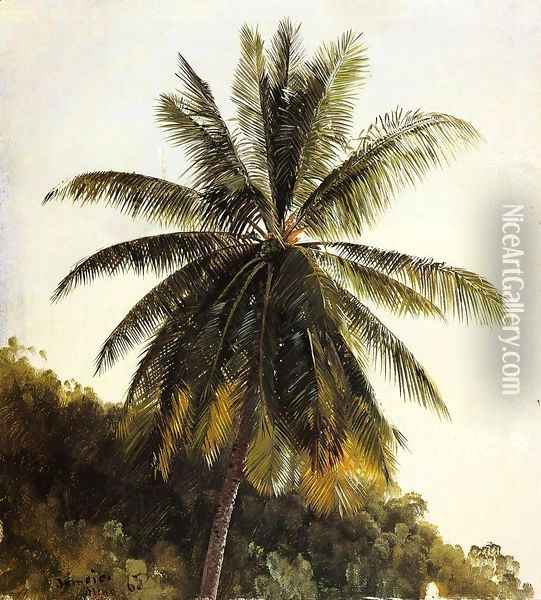 Palm Trees, West Indies Oil Painting - Frederic Edwin Church