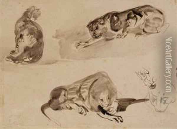 Studies Of A Cat And Two Lions Oil Painting - Eugene Delacroix