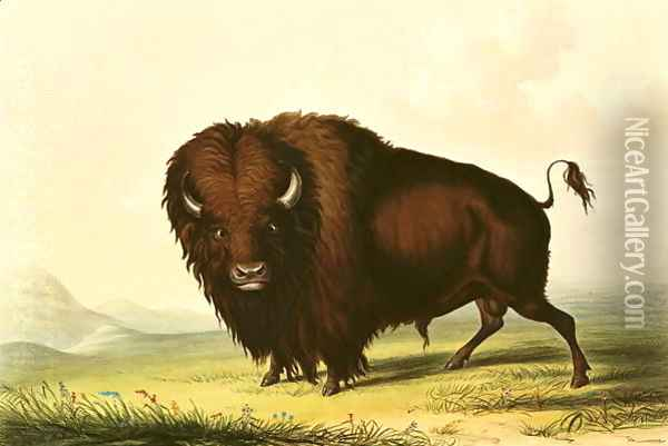 A Bison, c.1832 Oil Painting - George Catlin