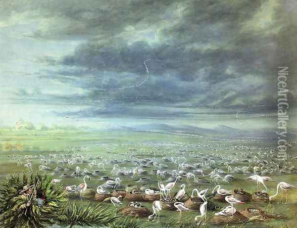 Ambush for flamingos in South America Oil Painting - George Catlin
