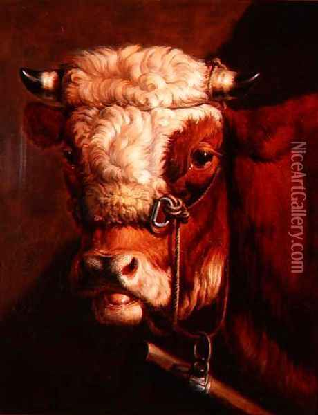 Portrait of a Bull's Head Oil Painting - Thomas Sidney Cooper