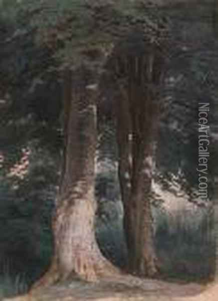 Beech Trees Oil Painting - Robert Gavin