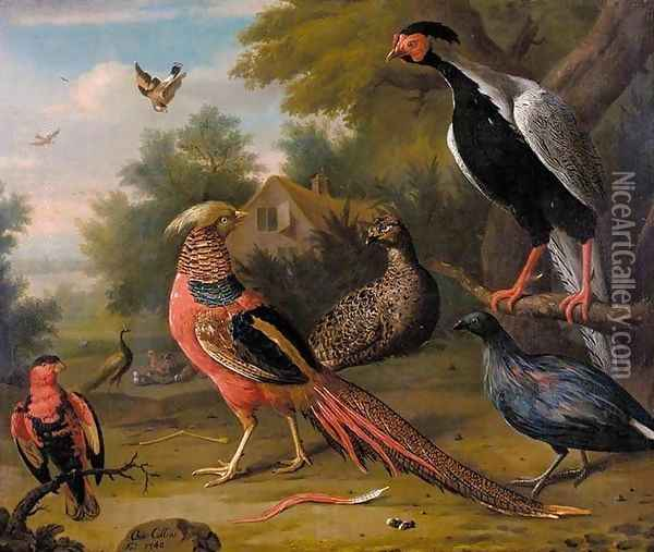Exotic Pheasants and Other Birds 1740 Oil Painting - Charles Collins