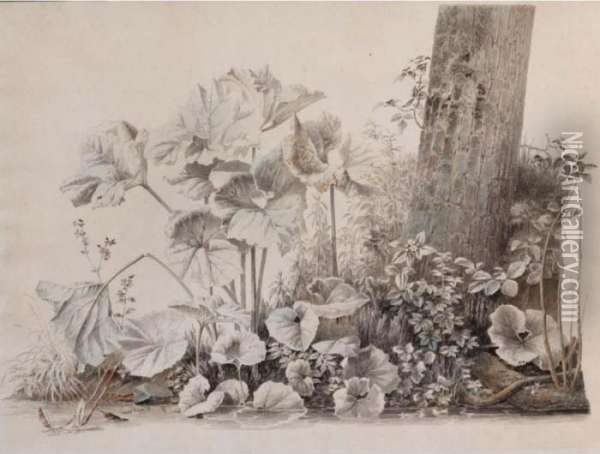 Burdocks, Campions And Brambles By A Treetrunk On A River Bank Oil Painting - Joseph Augustus Knip