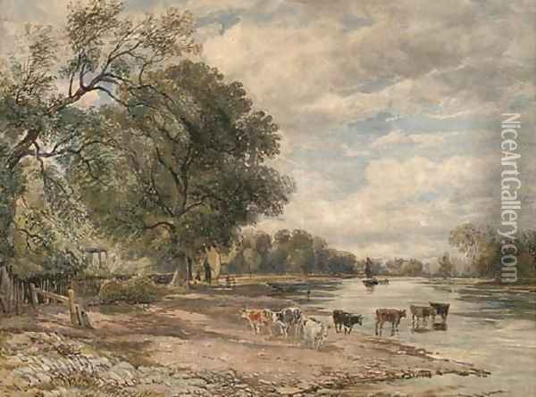 Cattle watering on the Thames at Richmond Oil Painting - David Cox