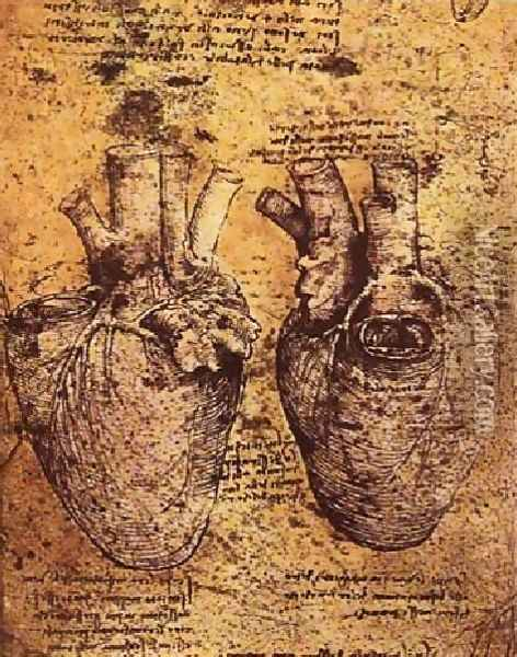 Heart And Its Blood Vessels Oil Painting - Leonardo Da Vinci
