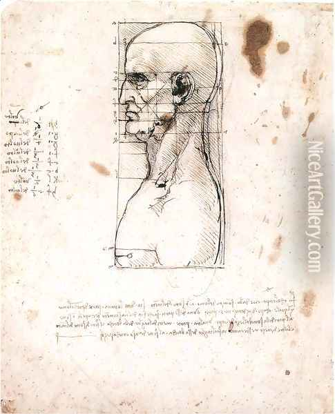 Male head in profile with proportions Oil Painting - Leonardo Da Vinci