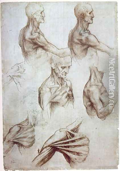 Muscles of the neck and shoulders 1515 Oil Painting - Leonardo Da Vinci