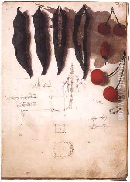 Fruit Vegetables And Other Studies Oil Painting - Leonardo Da Vinci