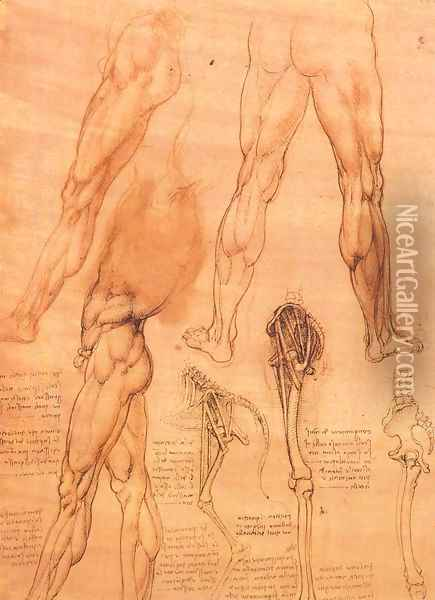 Studies of legs of man and the leg of a horse Oil Painting - Leonardo Da Vinci