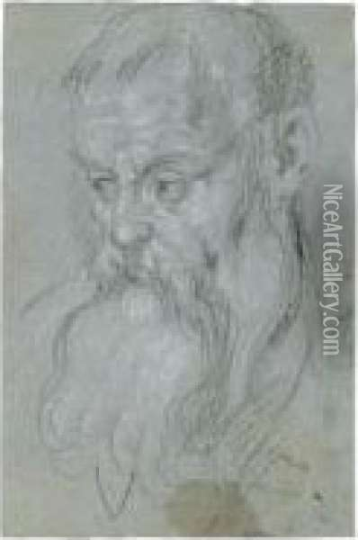 Head Of A Bearded Man Oil Painting - Alessandro Maganza