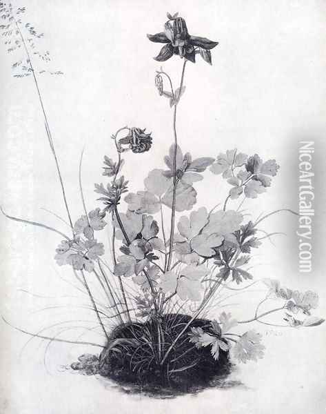 The Piece Of Turf With The Columbine Oil Painting - Albrecht Durer