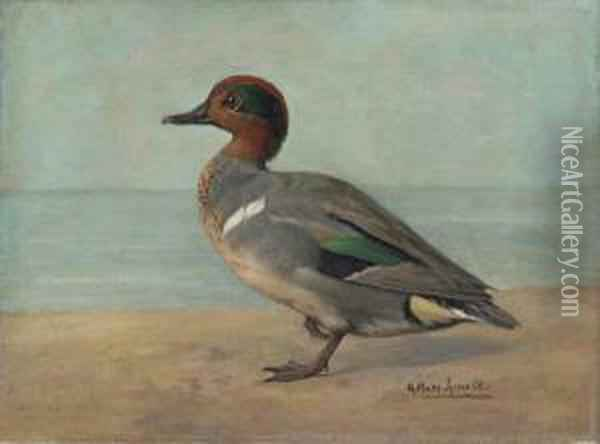 Green-winged Teal Oil Painting - Gustav Muss-Arnolt