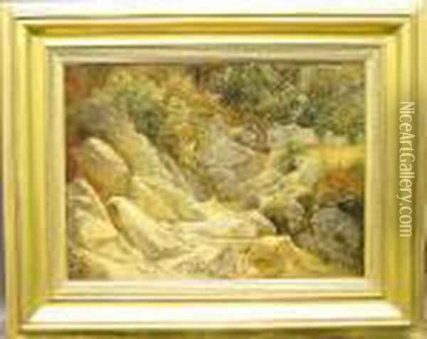 A Sunlit Streambed Oil Painting - Friedrich Nerly