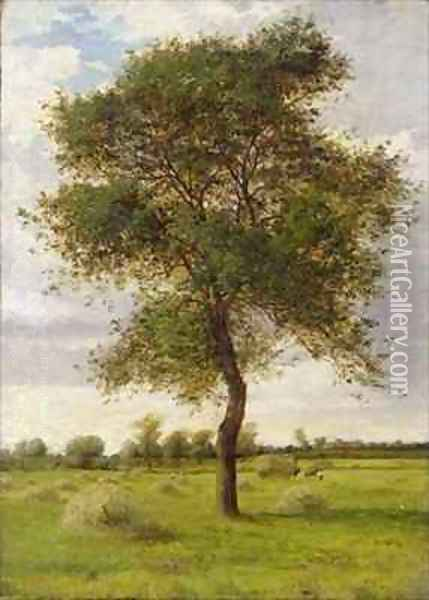 Study of an Ash Tree in Summer Oil Painting - James Hey Davies