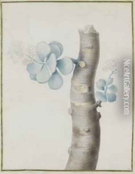 Blooming Flowers On A Branch Of A Succulent Plant Oil Painting - Nicolas Robert