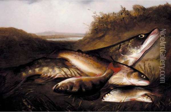 A Pike, A Trout, A Perch And Two Rudd; Rainbow Trout Oil Painting - Henry Leonidas Rolfe