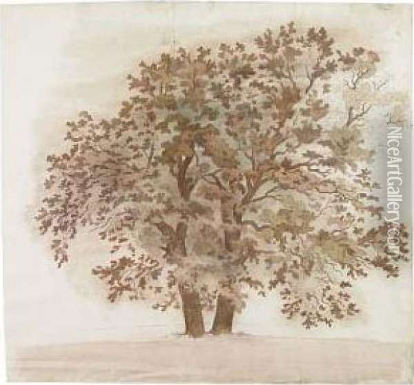 Study Of A Maple Tree Oil Painting - Friedrich Salathe