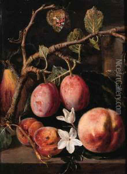 Plums, Apricots On A Twig, A 