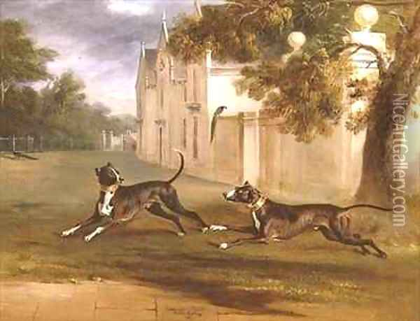 The Earl of Brownlows two Bull Terriers Nelson and Argo Oil Painting - John Snr Ferneley