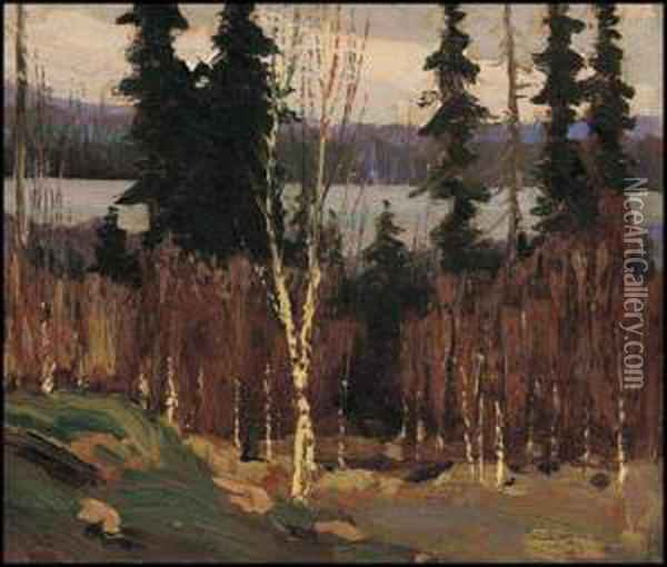 South Shore Of Canoe Lake, Algonquin Park Oil Painting - Tom Thomson