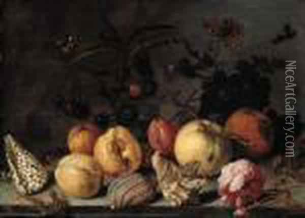Fruit And Shells, With 