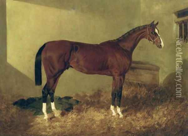 Aristides A Bay Colt 1844 Oil Painting - John Frederick Herring Snr