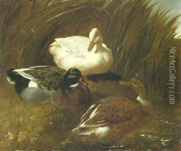 Ducks Beside A Stream 1851 Oil Painting - John Frederick Herring Snr
