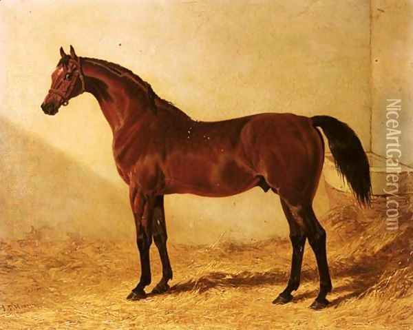 Glaucus, a bay racehorse in a stable Oil Painting - John Frederick Herring Snr