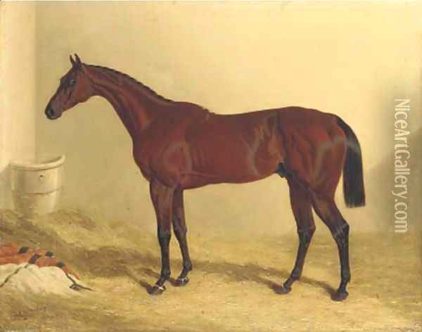 Bay Middleton, a bay racehorse in a loose box Oil Painting - John Frederick Herring Snr