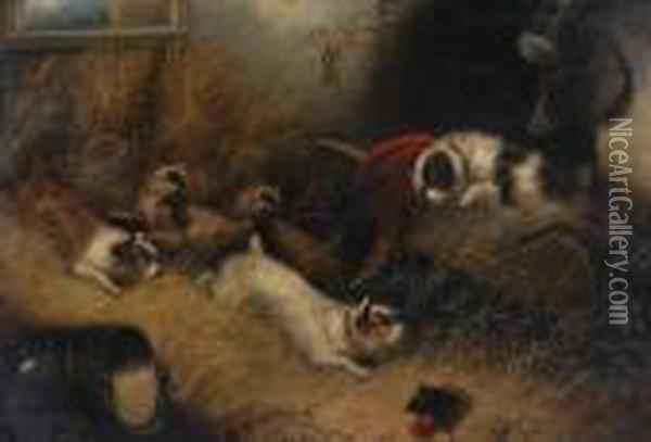 Terriers Ratting In A Barn Oil Painting - George Armfield