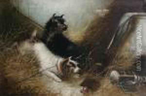 Leashed Terriers At An Intruder Oil Painting - George Armfield