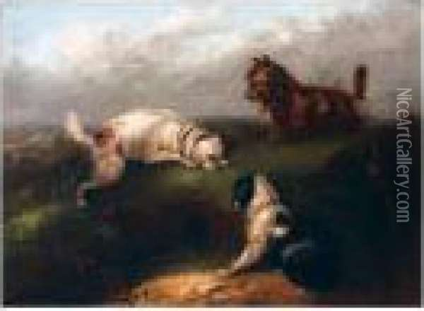 Terriers At A Rabbit Hole Oil Painting - George Armfield