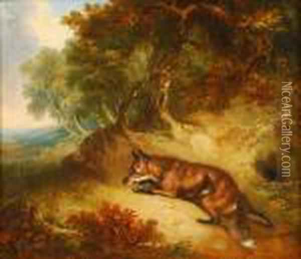 Fox In A Woodedlandscape Oil Painting - George Armfield