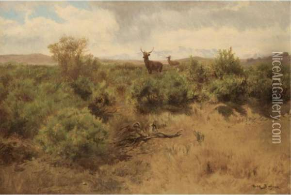 Stag And Doe In A Landscape Oil Painting - Rosa Bonheur