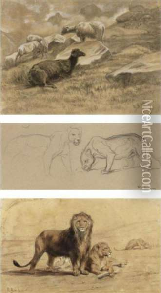 A Pair Of Lions, Sheep And Studies Of A Lioness Oil Painting - Rosa Bonheur