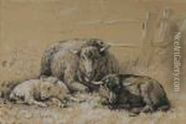 Sheep Resting In A Field Oil Painting - Rosa Bonheur