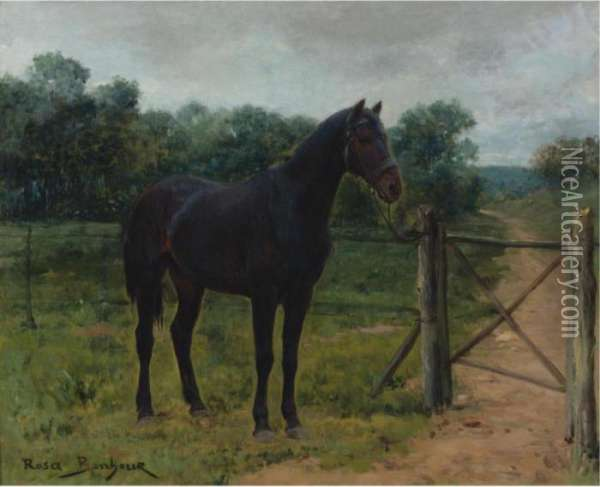 Horse Tied To A Gate Oil Painting - Rosa Bonheur