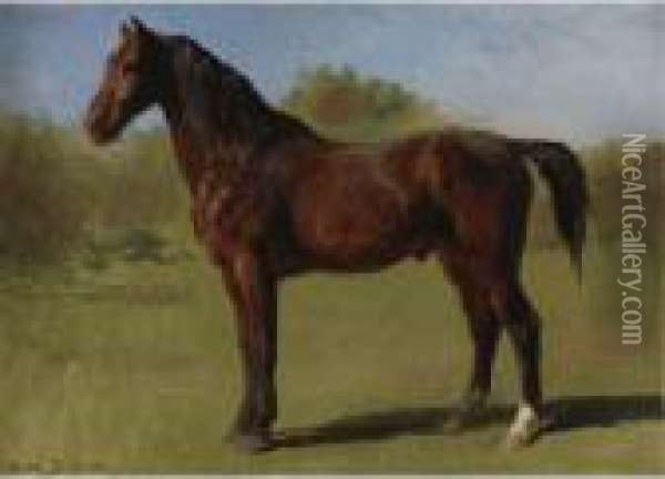 Study Of A Brown Bay Horse Oil Painting - Rosa Bonheur