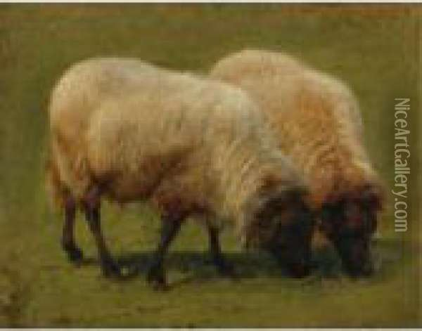 Two Black Face Sheep Grazing Oil Painting - Rosa Bonheur