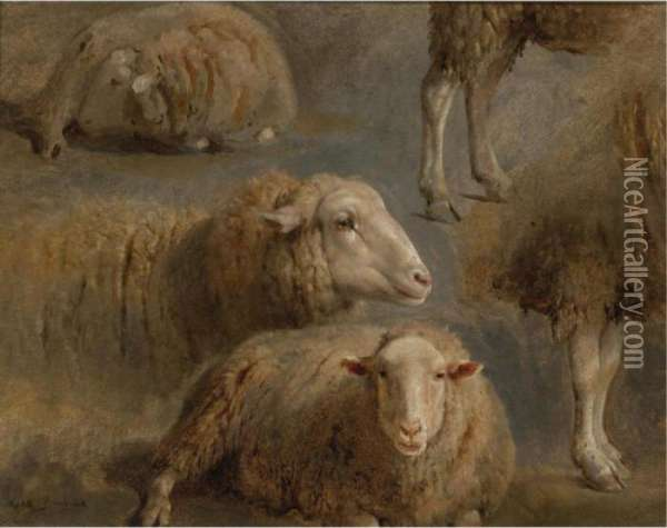A Study Of Sheep Oil Painting - Rosa Bonheur