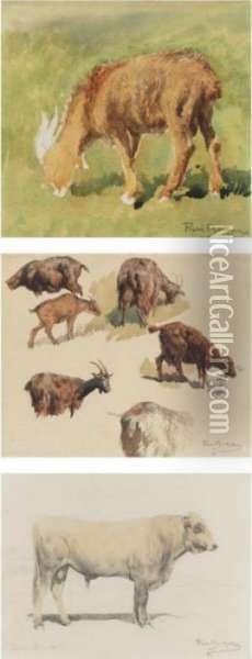 Study Of A Goat, Goats Grazing And Study Of A Bull Seen From The Side (three Works) Oil Painting - Rosa Bonheur