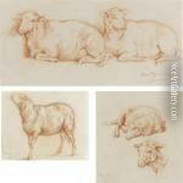 Sheep Resting, A Single Sheep And Studies Of A Sheep (three Works) Oil Painting - Rosa Bonheur