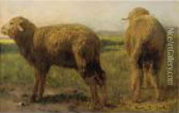 Sheep In A Meadow Oil Painting - Rosa Bonheur
