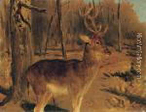 Stag In The Forest Oil Painting - Rosa Bonheur