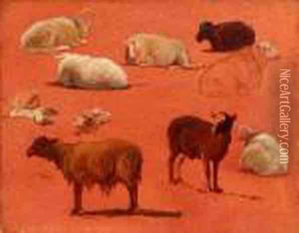 Untitled (sketches Of Sheep) Oil Painting - Rosa Bonheur